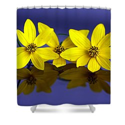 Shower Curtain featuring the photograph Tickseed Trio by Suzanne Stout