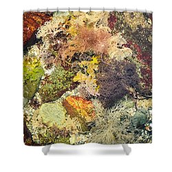 Tidal Pool Color Shower Curtain by Debbie Green