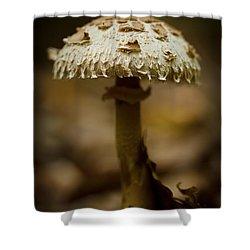 Tiffany Shroom Shower Curtain