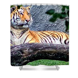Shower Curtain featuring the photograph Tiger 1 by Dawn Eshelman