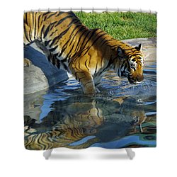 Tiger 1 Shower Curtain