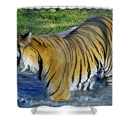 Tiger 4 Shower Curtain