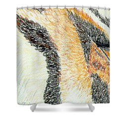 Shower Curtain featuring the drawing Tiger Amber by Stephanie Grant