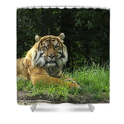 Shower Curtain featuring the photograph Tiger At Rest by Lingfai Leung