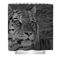 Tiger Bw Shower Curtain by Ernie Echols