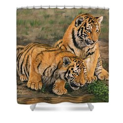 Tiger Cubs Shower Curtain by David Stribbling