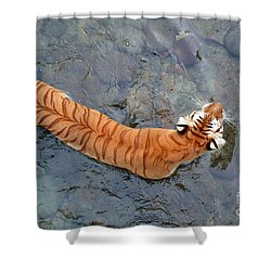 Shower Curtain featuring the photograph Tiger In The Stream by Robert Meanor