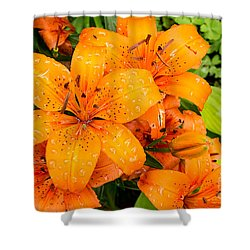 Tiger Lily After Morning Rain Shower Curtain
