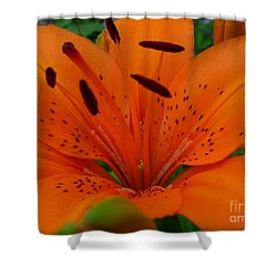 Shower Curtain featuring the photograph Tiger Lily by Bianca Nadeau