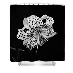 Tiger Lily In Black And White Shower Curtain by Sandy Keeton