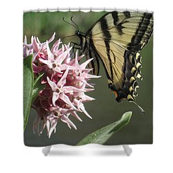 tiger on the Rio Grande Shower Curtain