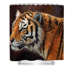 Tiger Portrait  Shower Curtain