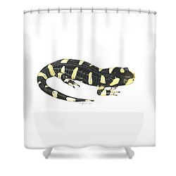 Tiger Salamander Shower Curtain by Cindy Hitchcock