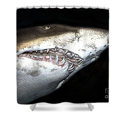 Tiger Shark Shower Curtain by Sergey Lukashin