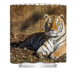 Tiger Shower Curtain by Steven Ralser