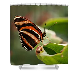 Tiger Striped Butterfly Shower Curtain