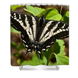 Shower Curtain featuring the photograph Tiger Swallowtail Butterfly by Jeff Goulden