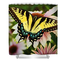 Tiger Swallowtail Butterfly Shower Curtain by Michael Porchik