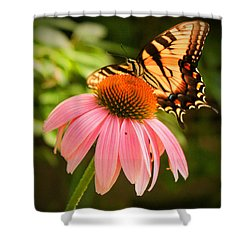 Tiger Swallowtail Feeding Shower Curtain by Michael Porchik