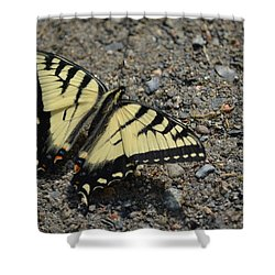 Shower Curtain featuring the photograph Tiger Swallowtail by James Petersen