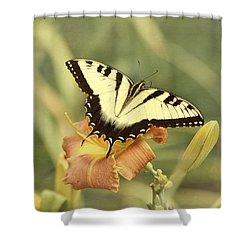 Tiger Swallowtail Shower Curtain by Kim Hojnacki