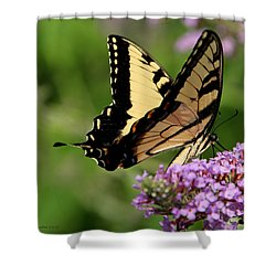 Tiger Swallowtail On Butterfly Bush 2 - Featured In 'comfortable Art' And 'flower W Co' Macro Groups Shower Curtain by EricaMaxine  Price