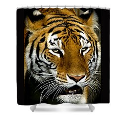 Tiger Tiger Burning Bright Shower Curtain by Venetia Featherstone-Witty