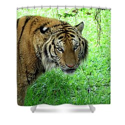 Tiger Tiger Shower Curtain by Ramona Johnston