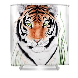 Tiger Tiger Where Shower Curtain