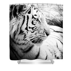 Shower Curtain featuring the photograph Tiger Watch by Erika Weber
