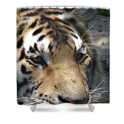 Tiger Water Shower Curtain by Greg Patzer