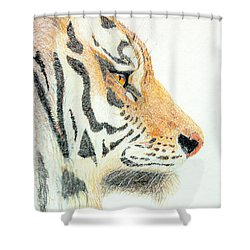Shower Curtain featuring the drawing Tiger's Head by Stephanie Grant