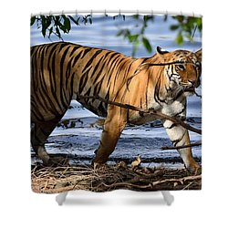 Tigress Along The Banks Shower Curtain by Fotosas Photography