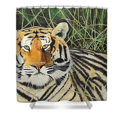 Shower Curtain featuring the painting Tigress by Jeanne Fischer