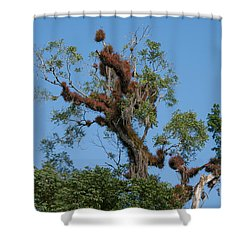 Tikal Furry Tree Shower Curtain