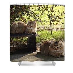 Timber And Cougar Shower Curtain