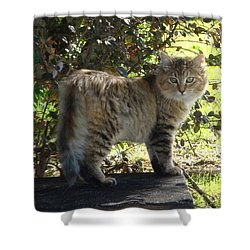 Timber The Kitten Shower Curtain