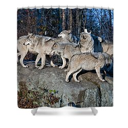 Timber Wolf Pack Shower Curtain