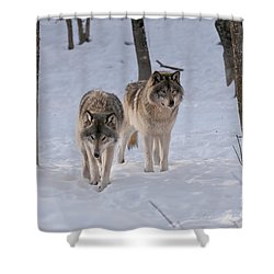 Shower Curtain featuring the photograph Timber Wolf Pair  by Wolves Only