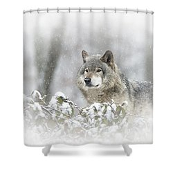 Timber Wolf Pictures 279 Shower Curtain