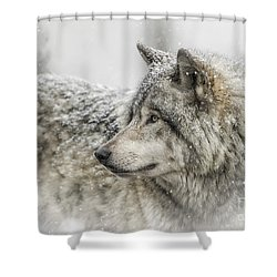 Timber Wolf Pictures 280 Shower Curtain