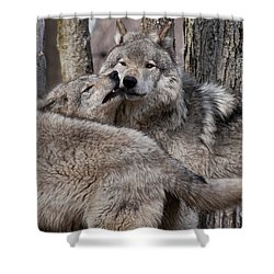 Shower Curtain featuring the photograph Timber Wolves Playing by Wolves Only