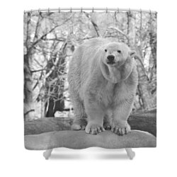 Time For A Dip Shower Curtain by Trish Tritz