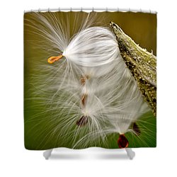 Time For Me To Fly Shower Curtain