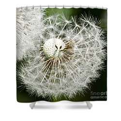 Shower Curtain featuring the photograph Time To Fly by Liz  Alderdice