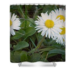 Tiny Daisies Shower Curtain by Chalet Roome-Rigdon