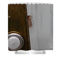 Tiny Doorbell Moth Shower Curtain