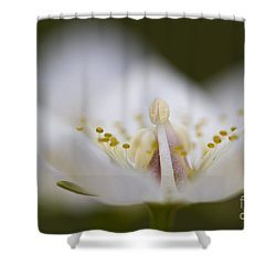 Tiny Little Arctic Wildflower Shower Curtain by Heiko Koehrer-Wagner