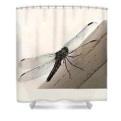Tiny Magnificence  Shower Curtain