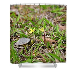 Tiny Turtle Shower Curtain by Al Powell Photography USA